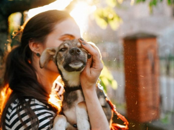 Adopt a furry friend to explore a very pet-friendly Northwest Arkansas